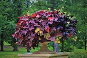 """""""...Скоро осень, за окнами август, от дождя потемнели листы..."""""""