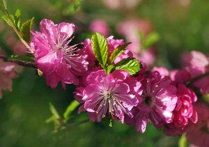 Так хочется уже весны и цветов!